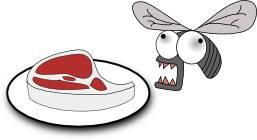 Anti-mouche: vos aliments